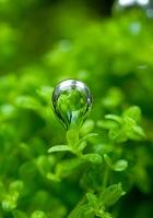 grass, leaf, drop