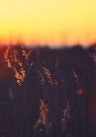 grass, light, dark