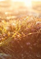 grass, light, dew