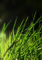 grass, light, shadow