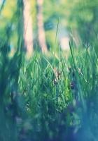 grass, macro, green
