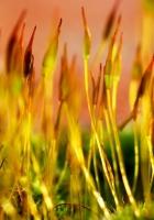grass, plants, surface