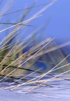 grass, snow, snowdrift