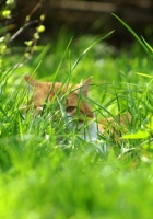 grass, spring, cat