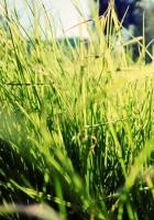 grass, sunlight, bright