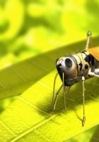 grasshopper, leaf, grass
