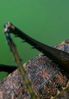 grasshopper, legs, torso