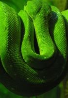 green snake, branch, down