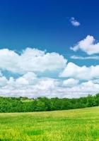 greens, meadow, trees