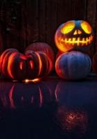 halloween, holiday, pumpkin