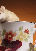 hamster, cup, baby