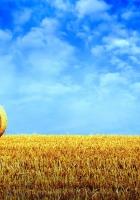 hay, bale, rick