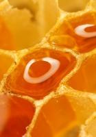 honeycombs, honey, macro