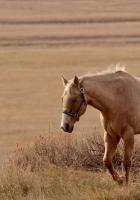 horse, grass, walk