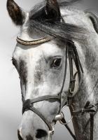 horse, mane, color
