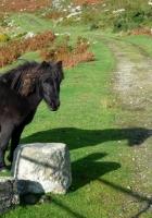 horse, pony, grass
