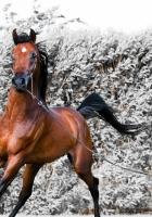 horse, running, harness