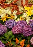 hydrangea, lilies, flowers