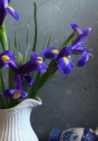 irises, flowers, jar
