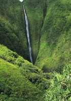 jungle, falls, greens