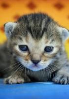 kitten, baby, background