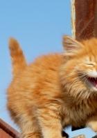 kitten, fence, climbing