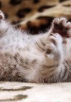 kitten, little, play
