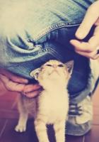 kitten, man, hands