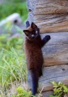 kitten, wooden, climb