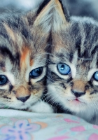 kittens, couple, down