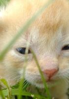 kitty, muzzle, eyes