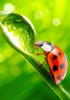 ladybird, grass, straw