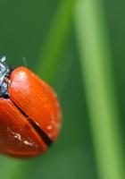 ladybug, surface, grass