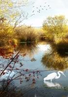 lake, crane, phantom
