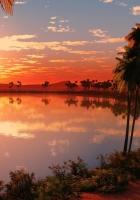 lake, palm trees, decline