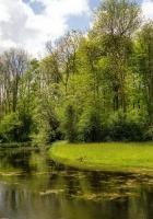lake, wood, coast