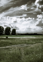 landscape, black-and-white, trees