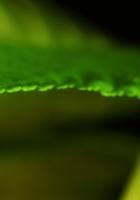 leaf, drop, shape
