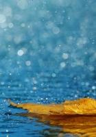 leaf, drops, rain