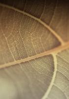 leaf, line, surface