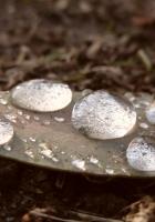 leaves, dry, drops