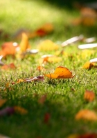 leaves, grass, fall