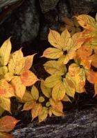 leaves, trees, bark