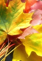 leaves, yellow, autumn