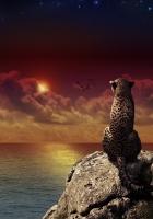 leopard, sitting, sunset