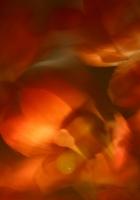 light, fire, oiled