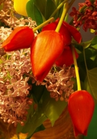 lilacs, tulips, bouquet