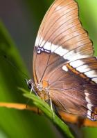 macro, butterfly, grass