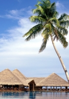 maldives, resort, palm trees