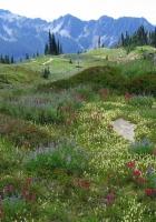 meadow, alpes, mountains